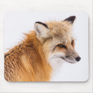 red-fox mouse pad