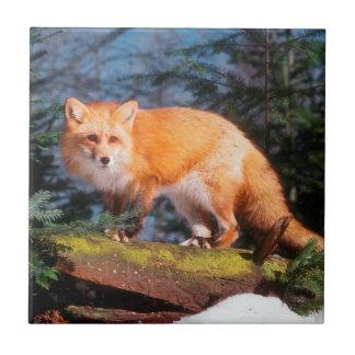 Red Fox on a log Ceramic Tile