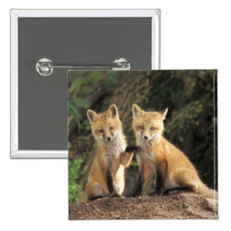 Red Fox pup in front of den Vulpes vulpes) 15 Cm Square Badge