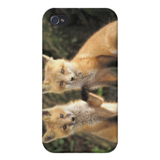 Red Fox pup in front of den Vulpes vulpes) Case For The iPhone 4