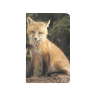 Red Fox pup in front of den Vulpes vulpes) Journal
