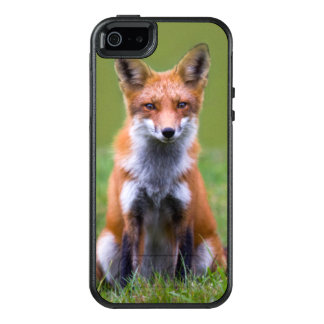 Red Fox Sitting On Grass OtterBox iPhone 5/5s/SE Case