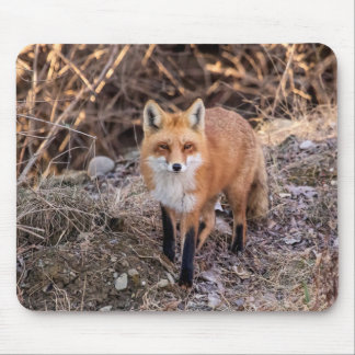 Red Fox up close and personal Mouse Pad
