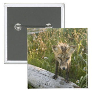 Red Fox, Vulpes fulva on log, Wildflowers, 15 Cm Square Badge