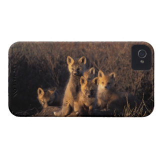 red fox, Vulpes vulpes, kits on their den in the iPhone 4 Case-Mate Case