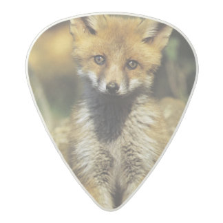 Red Fox, Vulpes vulpes , young at den, Acetal Guitar Pick