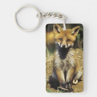 Red Fox, Vulpes vulpes , young at den, Key Ring