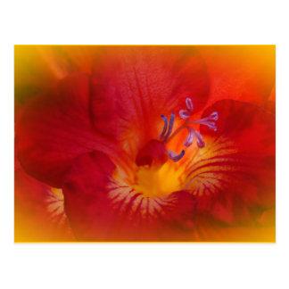 Red Freesia Flower Items Postcard