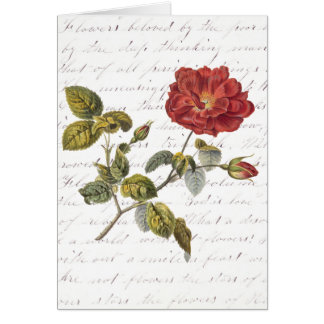 Red French Rose: Text on Flowers by Clara Balfour Card