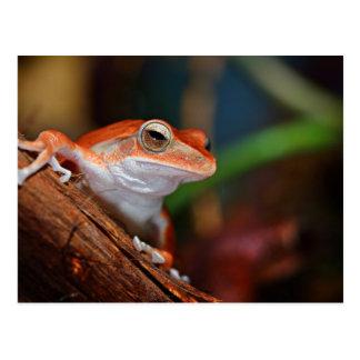 Red Frog Postcard