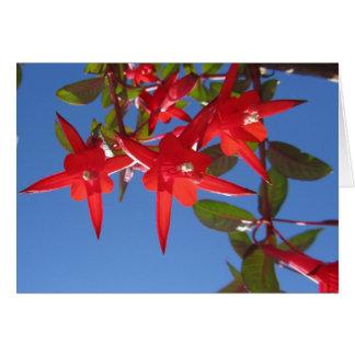 Red Fuchsia Flowers Card