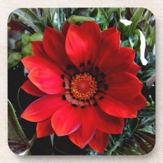 Red Gazania Flower Coaster