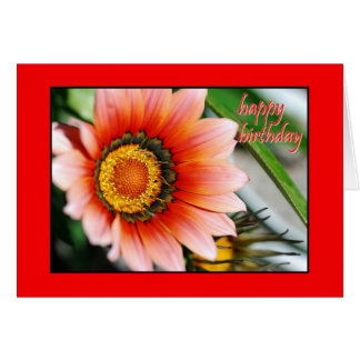 Red Gazania Happy Birthday Card