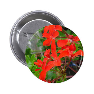 Red Geranium blooms Pinback Buttons