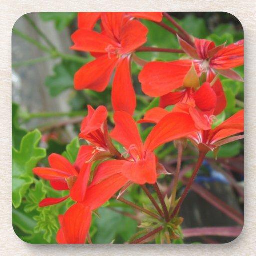 Red Geranium blooms Coasters