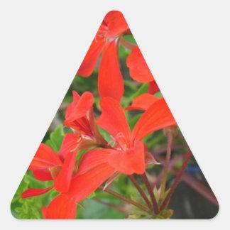 Red Geranium blooms Triangle Sticker