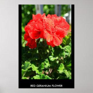 Red Geranium Flower Poster,Print
