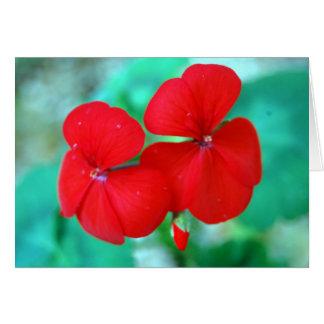 Red Geranium Flowers Card