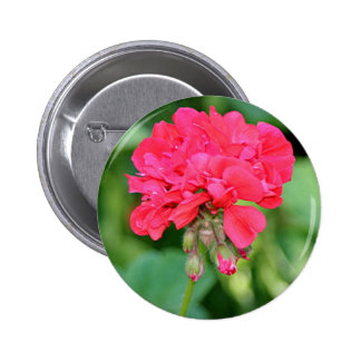 Red Geranium flowers in bloom 2 Pinback Buttons