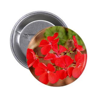 Red Geranium flowers in bloom Pins
