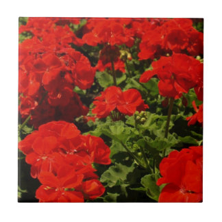 Red Geraniums Tile