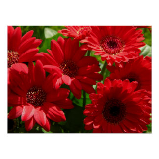 Red Gerber Daisies 2012 5a Poster