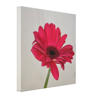 Red Gerbera Daisy Canvas Canvas Print