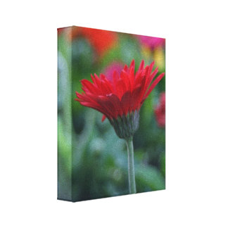 Red gerbera daisy flower photograph on canvas canvas print
