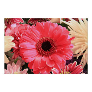 Red Gerbera Daisy Posters