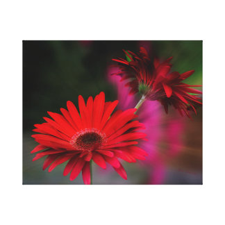 Red Gerbera Daisy Refection Stretched Canvas Print