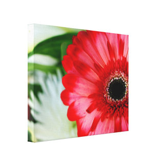 Red Gerbera Daisy Stretched Canvas Print