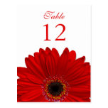 Red Gerbera Daisy Table Number Card Flat Post Cards