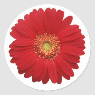 Red gerbera diasy Sticker