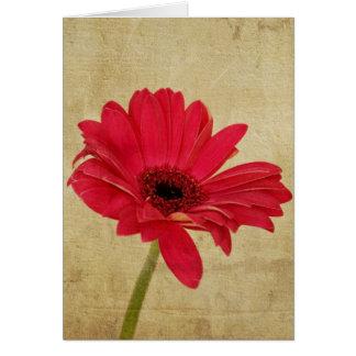 Red Gerbera Flower Card