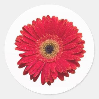 Red Gerbera Sticker