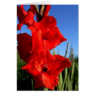Red GladiolusAnd The Blue Sky Card