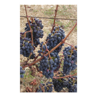 Red grapes on the vine . Tuscany, Italy Custom Stationery