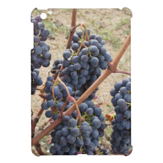 Red grapes on the vine . Tuscany, Italy iPad Mini Cover