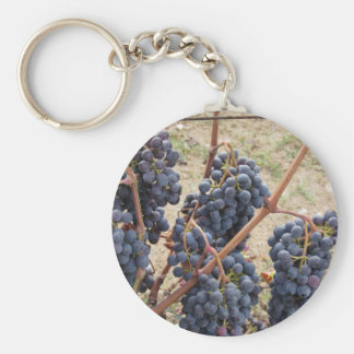 Red grapes on the vine . Tuscany, Italy Key Ring