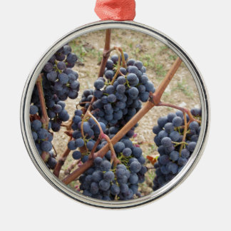 Red grapes on the vine . Tuscany, Italy Metal Ornament