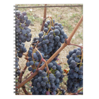 Red grapes on the vine . Tuscany, Italy Notebook