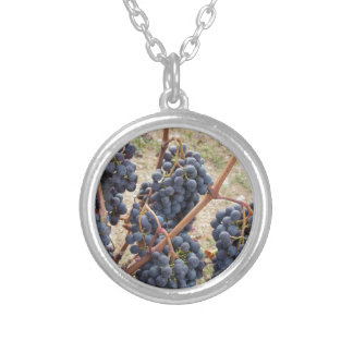 Red grapes on the vine . Tuscany, Italy Silver Plated Necklace