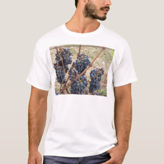 Red grapes on the vine . Tuscany, Italy T-Shirt