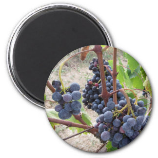 Red grapes on the vine with green leaves magnet