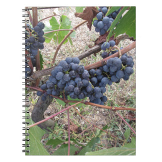 Red grapes on the vine with green leaves notebooks