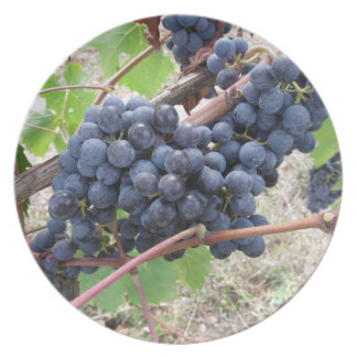 Red grapes on the vine with green leaves plate
