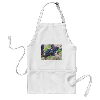 Red grapes on the vine with green leaves standard apron
