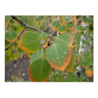 red green aspen leaf postcard
