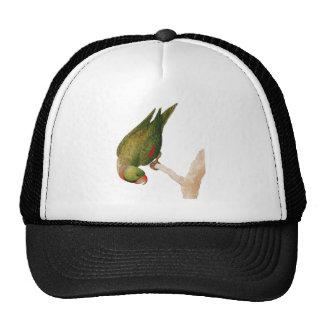 Red Green Parrot Cap
