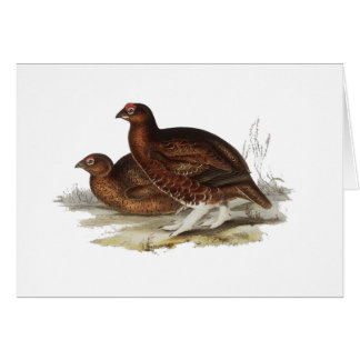 Red Grouse Card